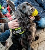 Sniffer dogs to take centre stage at roadshows highlighting illegal tobacco trade