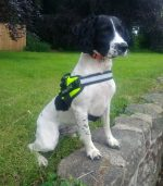 Sniffer dog Pippa to show off her skills at roadshows highlighting illegal tobacco trade