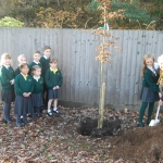 Help plant new trees in Surrey this Christmas